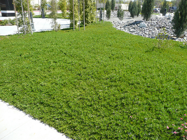 Favorite and Beautiful Lawn Alternatives - The Sharp ...